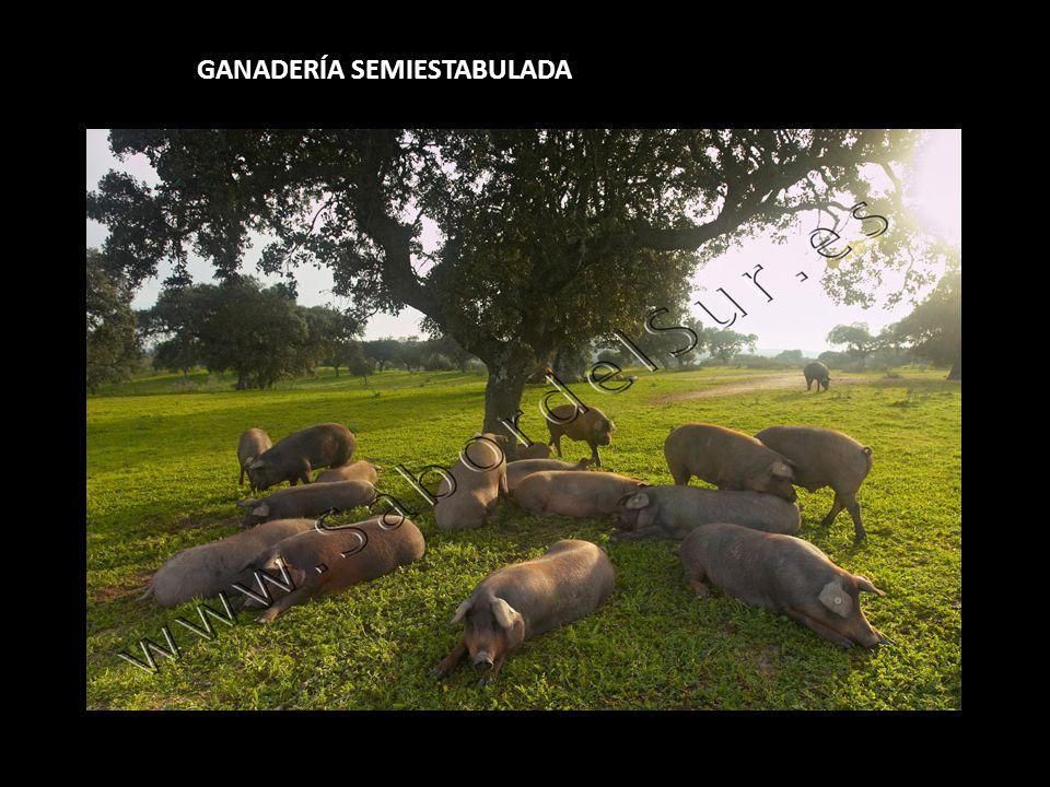 GANADERÍA SEMIESTABULADA
