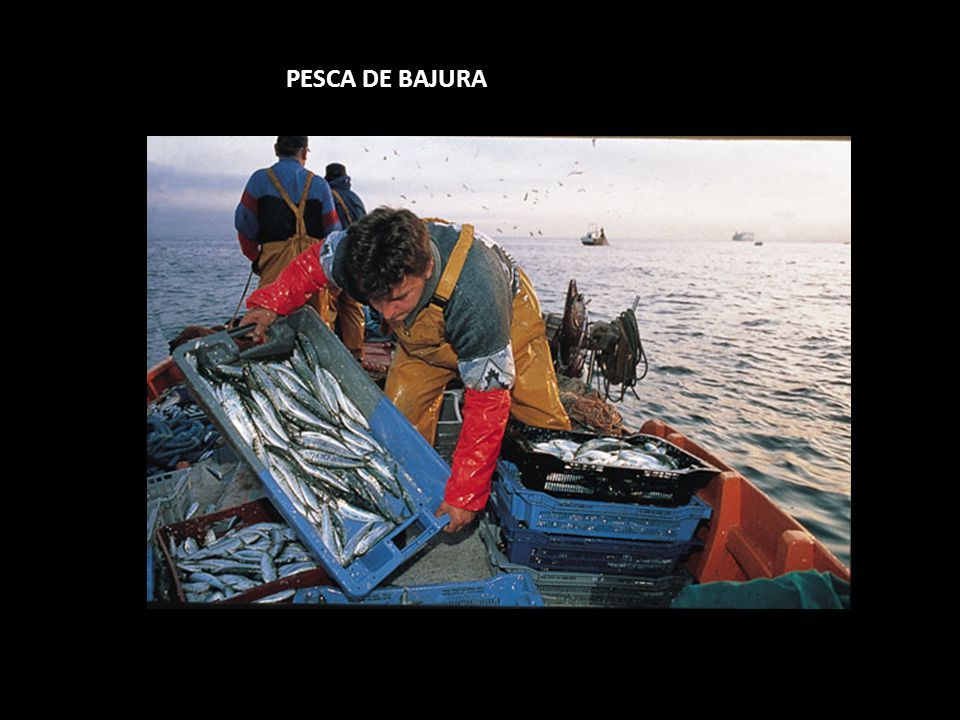 PESCA DE BAJURA