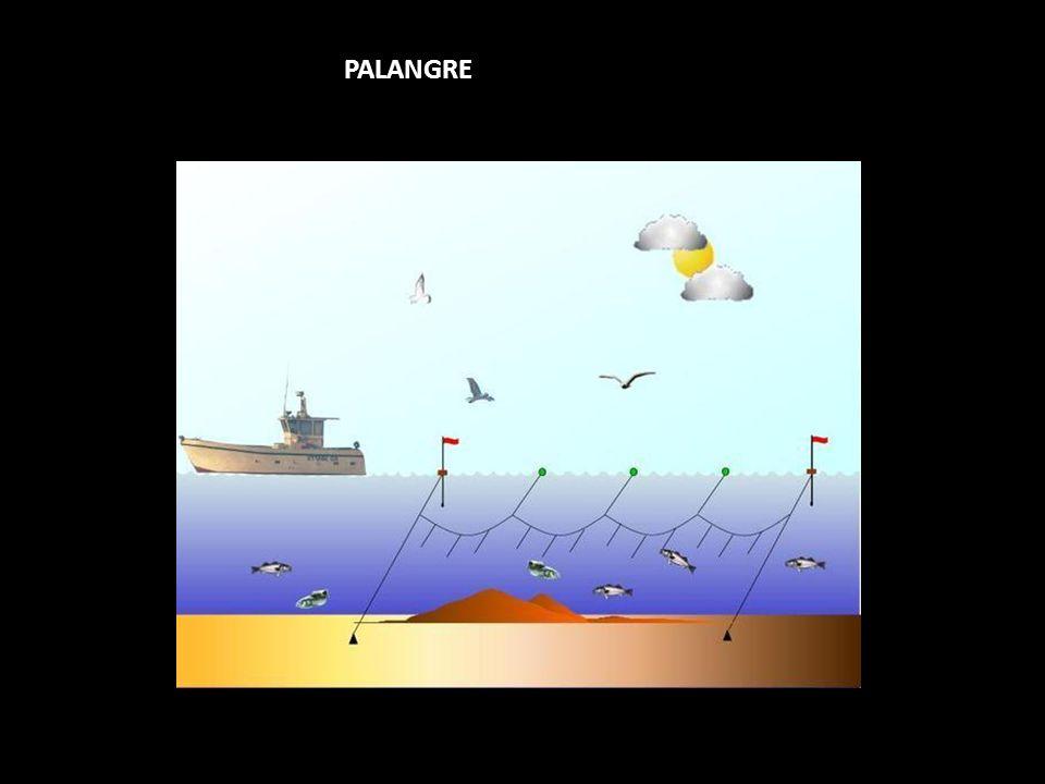 PALANGRE