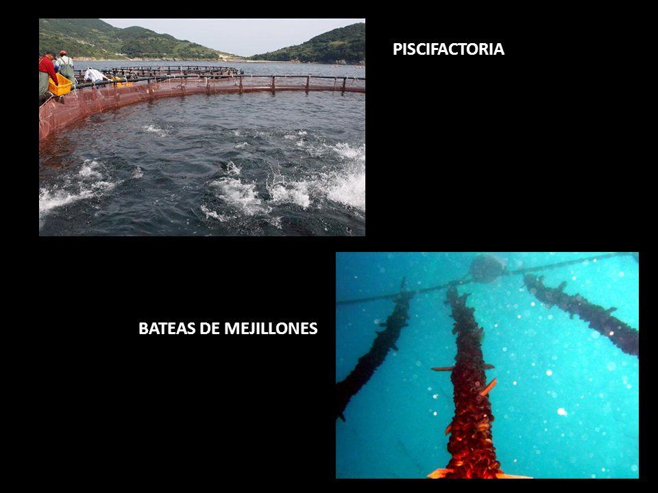 PISCIFACTORIA BATEAS DE MEJILLONES