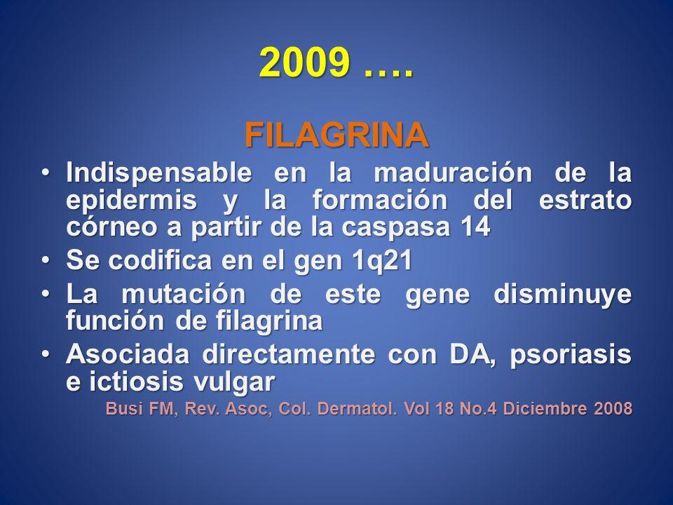 2009 ….FILAGRINA. Indispensable en la maduración de la epidermis y la formación del estrato córneo a partir de la caspasa 14.