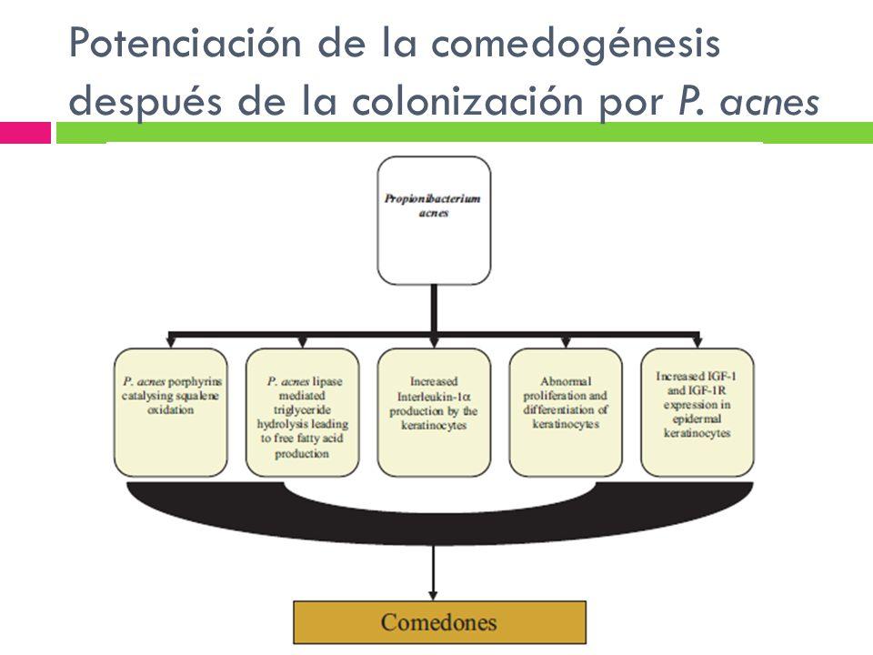 Potenciación de la comedogénesis después de la colonización por P