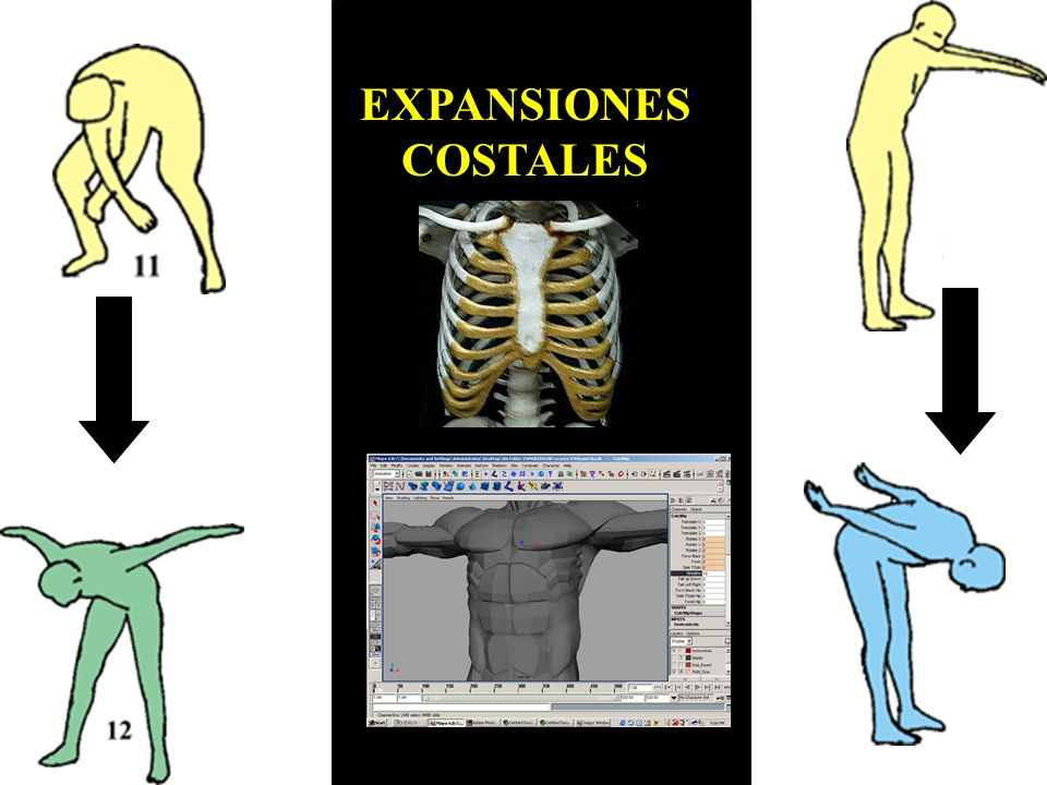 EXPANSIONES COSTALES