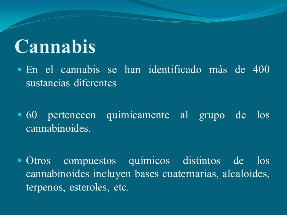 Cannabis 60 pertenecen químicamente al grupo de los cannabinoides.