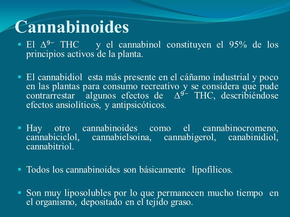 CannabinoidesEl ∆⁹⁻ THC y el cannabinol constituyen el 95% de los principios activos de la planta.