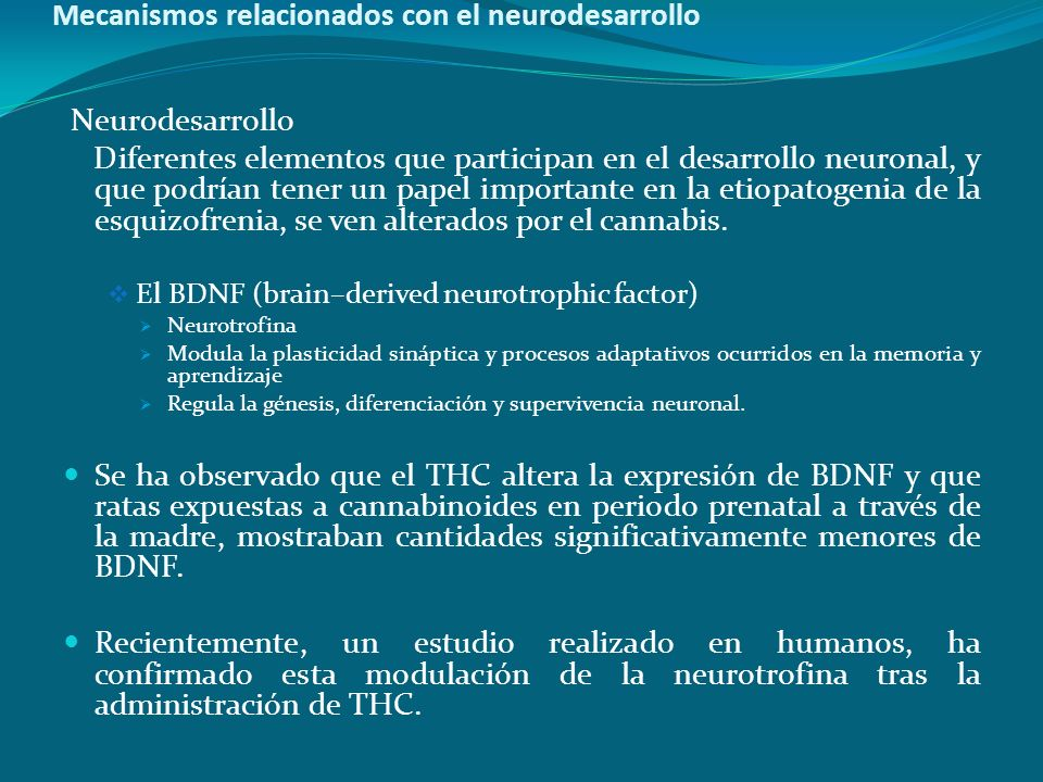 Mecanismos relacionados con el neurodesarrollo