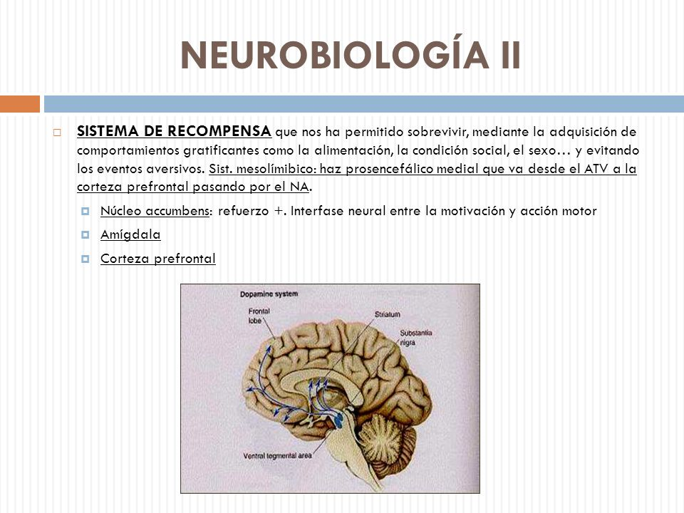 NEUROBIOLOGÍA II