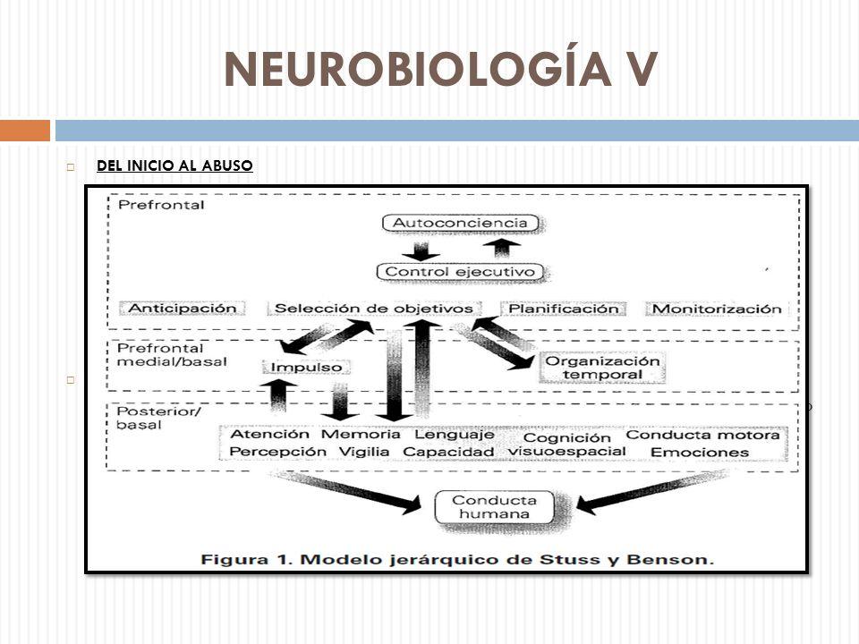 NEUROBIOLOGÍA V DEL INICIO AL ABUSO