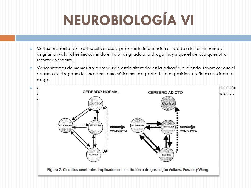 NEUROBIOLOGÍA VI