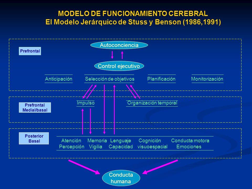 MODELO DE FUNCIONAMIENTO CEREBRAL