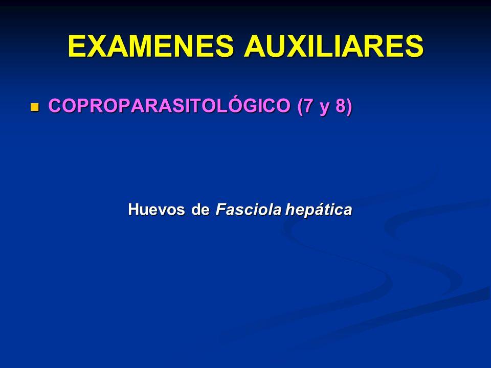 EXAMENES AUXILIARES COPROPARASITOLÓGICO (7 y 8)