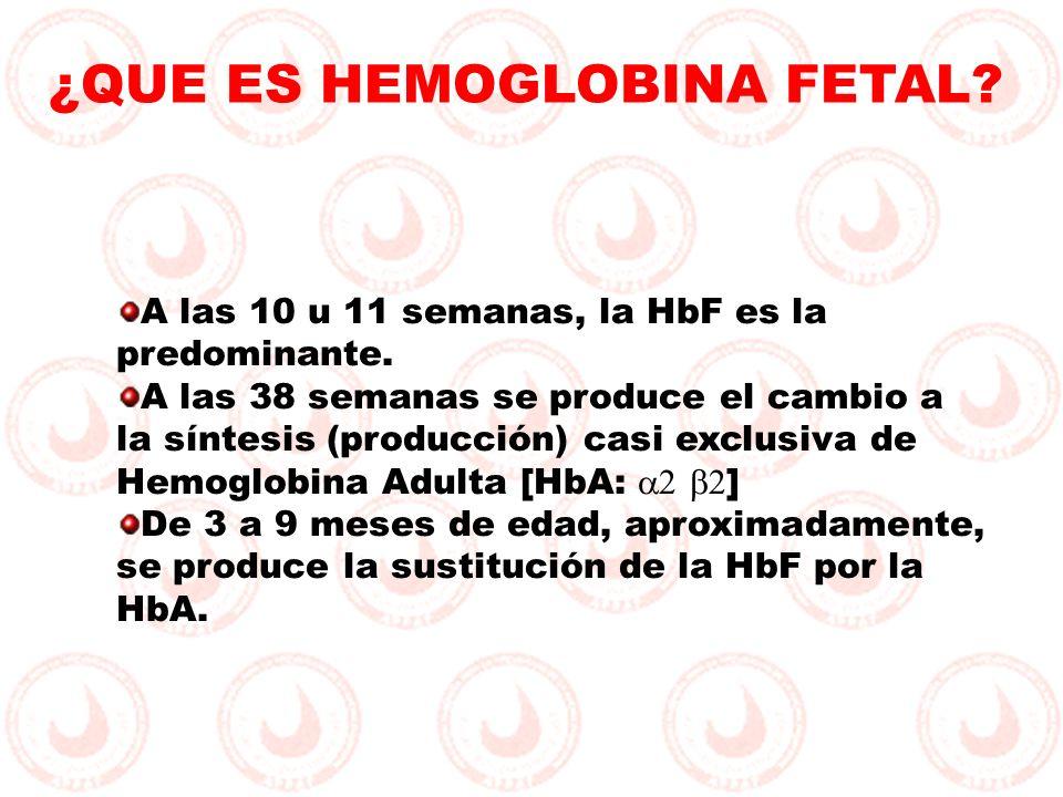 ¿QUE ES HEMOGLOBINA FETAL