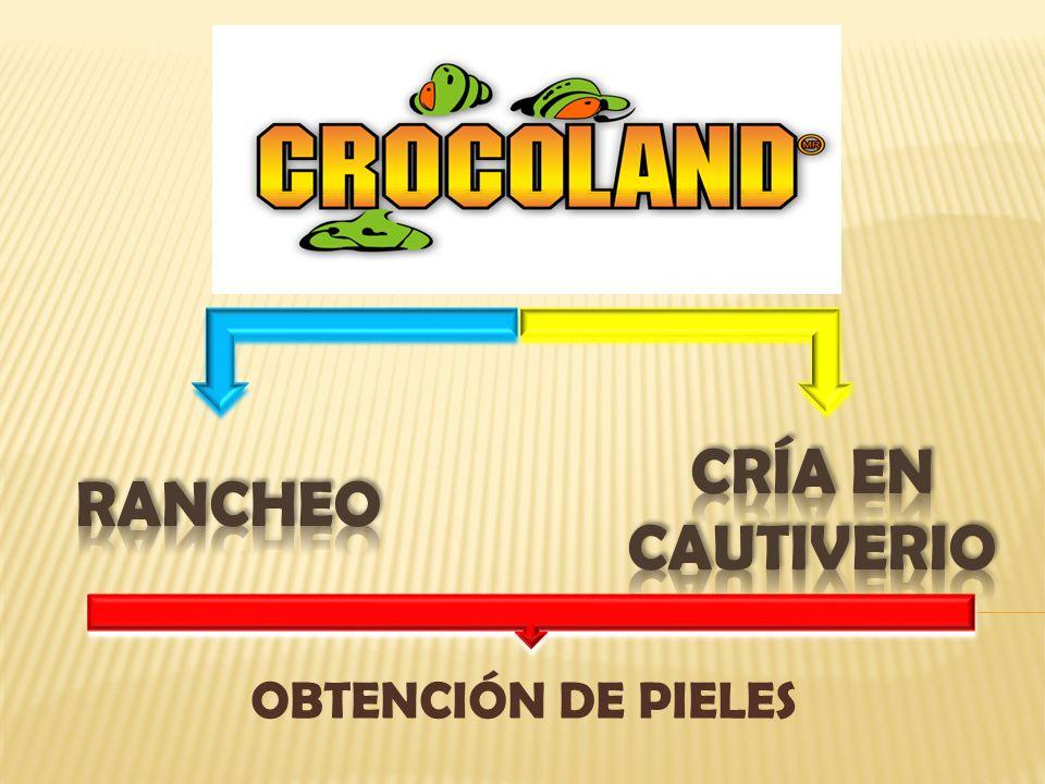 CRÍA EN CAUTIVERIO Rancheo OBTENCIÓN DE PIELES