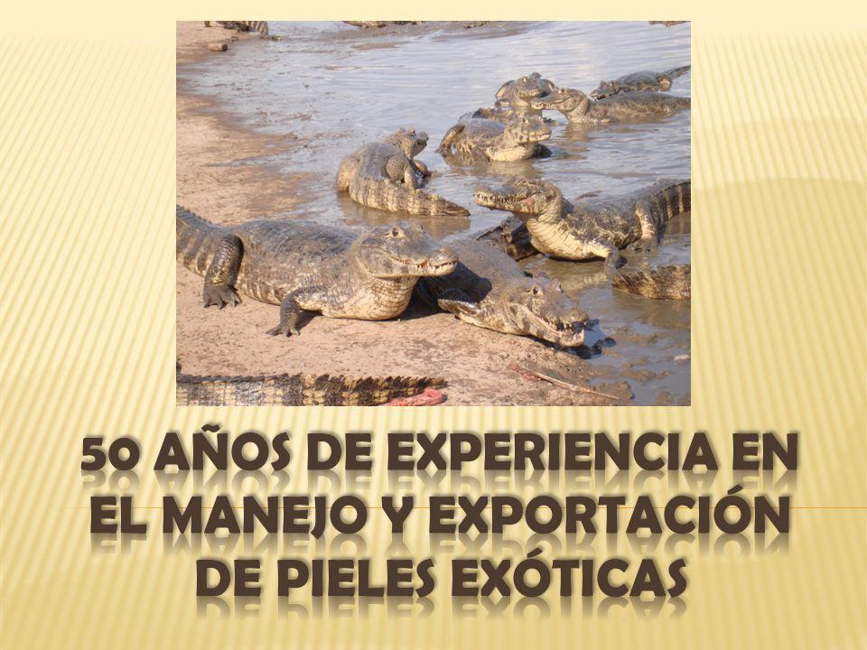50 AÑOS DE EXPERIENCIA EN EL MANEJO Y EXPORTACIÓN DE PIELES EXÓTICAS