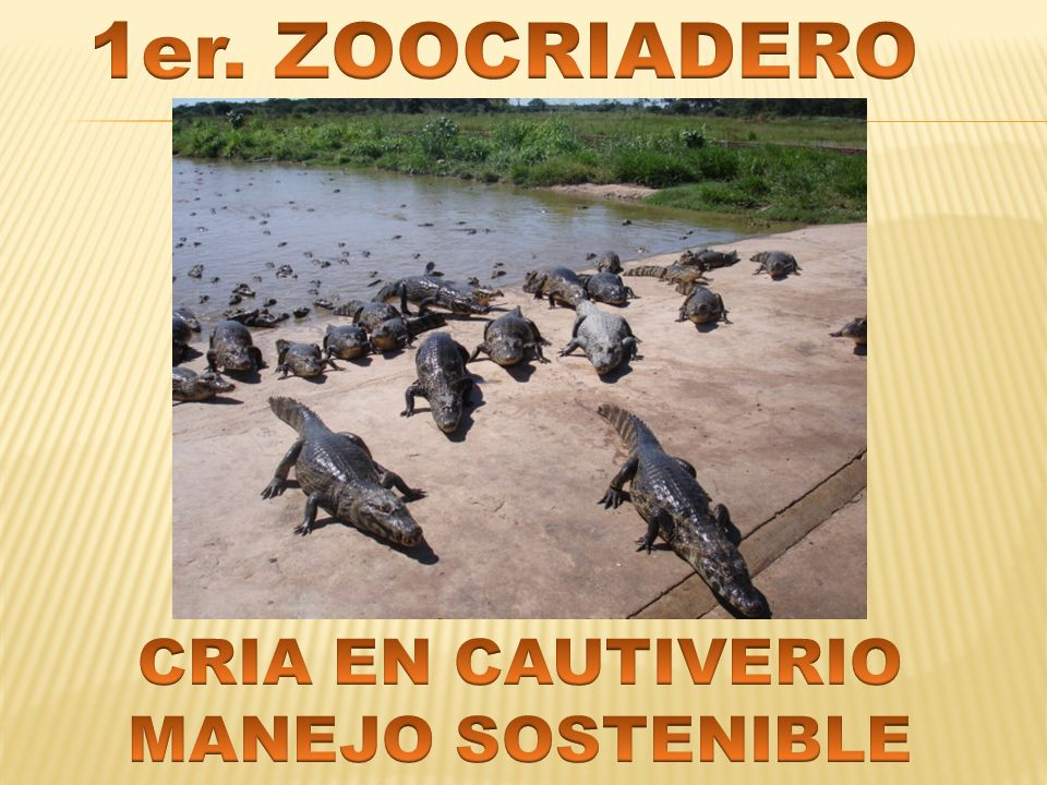 1er. ZOOCRIADERO CRIA EN CAUTIVERIO MANEJO SOSTENIBLE