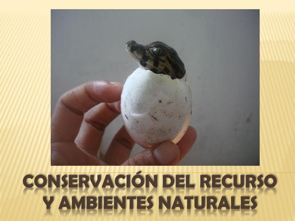 CONSERVACIÓN DEL RECURSO Y AMBIENTES NATURALES