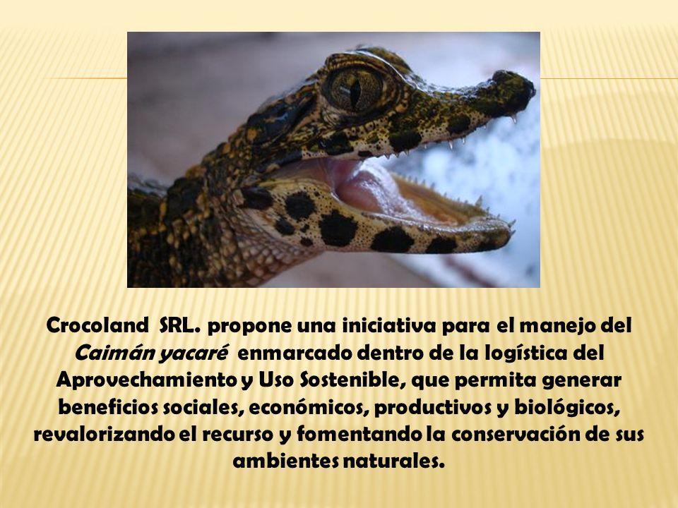 Crocoland SRL.