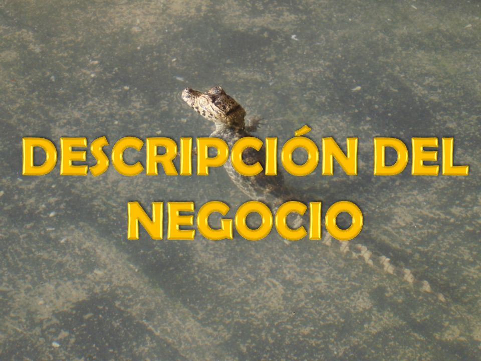 DESCRIPCIÓN DEL NEGOCIO