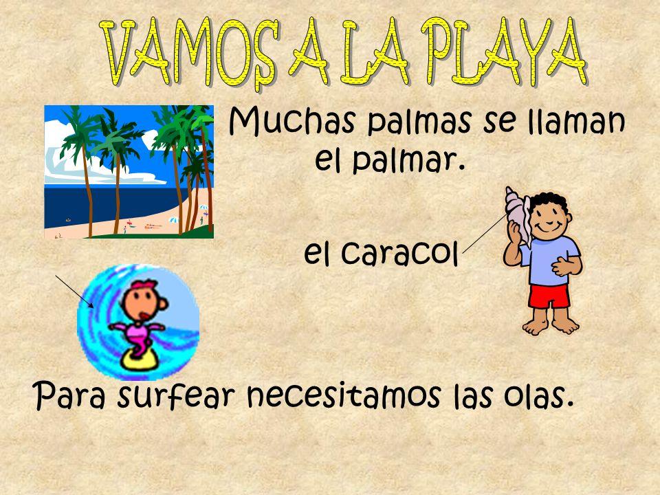 VAMOS A LA PLAYA Muchas palmas se llaman el palmar. el caracol Para surfear necesitamos las olas.