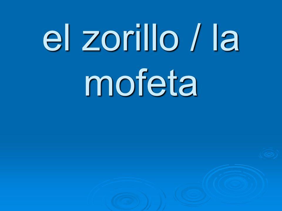 el zorillo / la mofeta