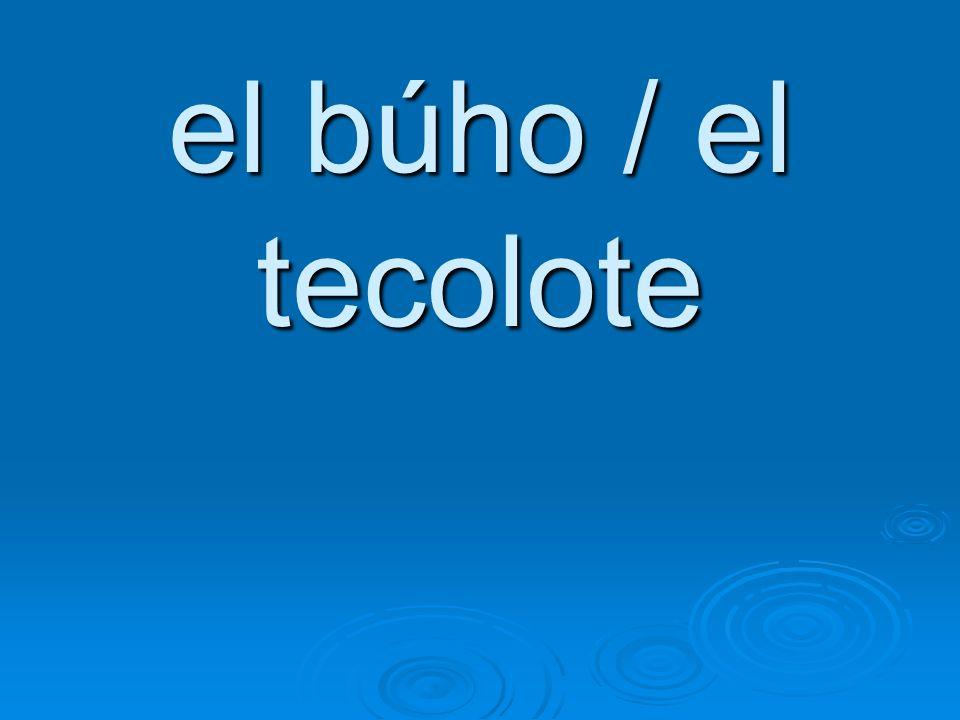 el búho / el tecolote