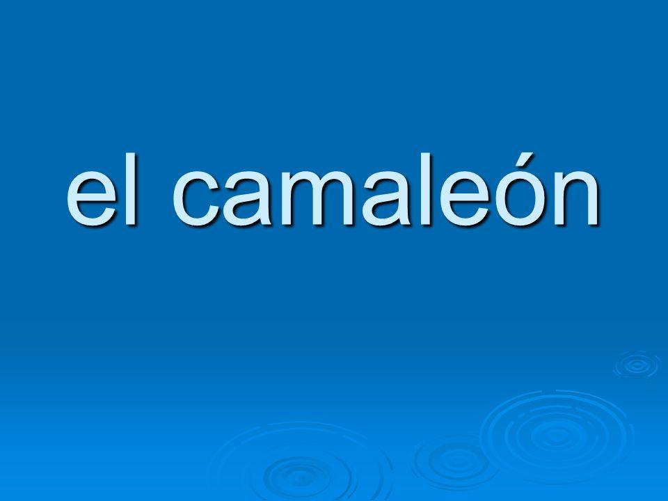 el camaleón