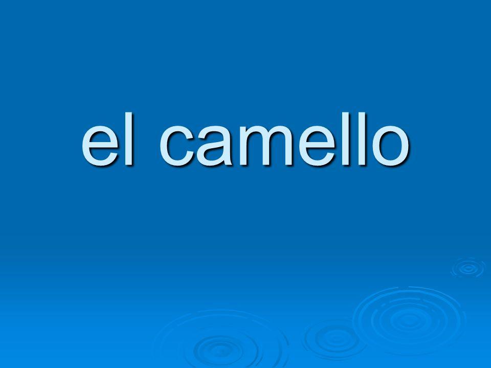 el camello
