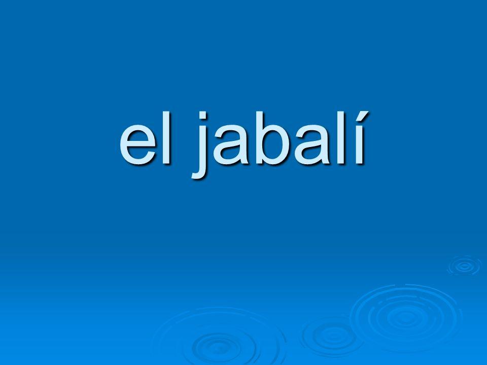 el jabalí