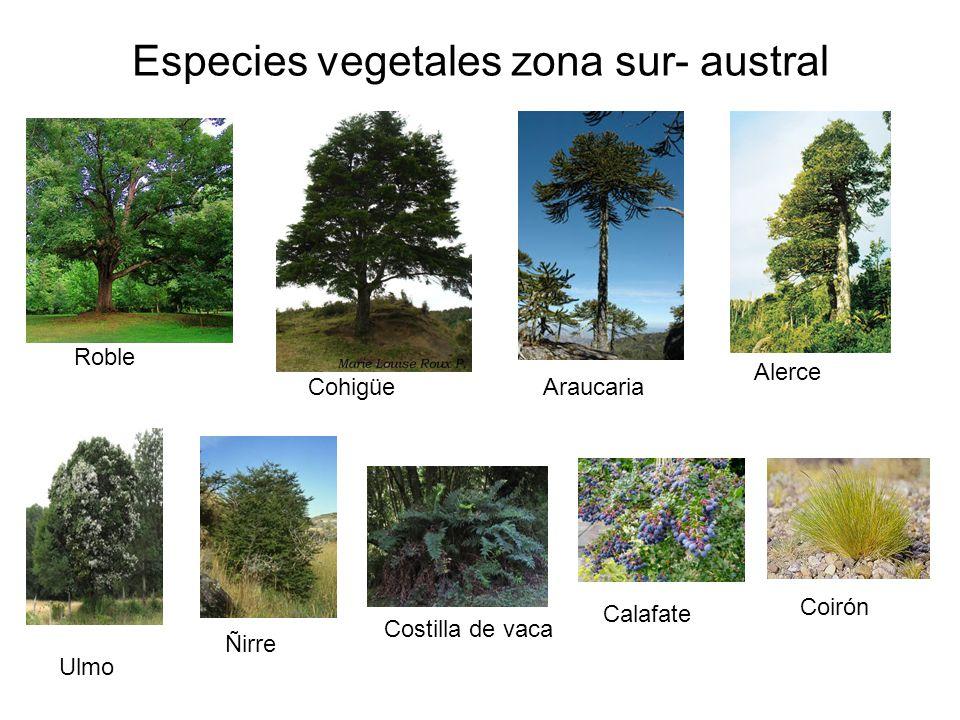 Los seres vivos en la naturaleza ppt video online descargar for Poda de arboles zona sur