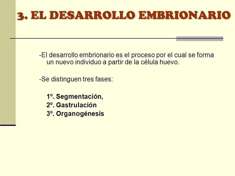 3. EL DESARROLLO EMBRIONARIO