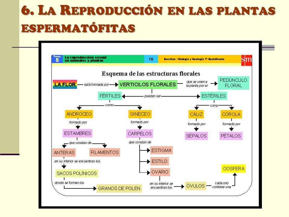 6. La Reproducción en las plantas espermatófitas