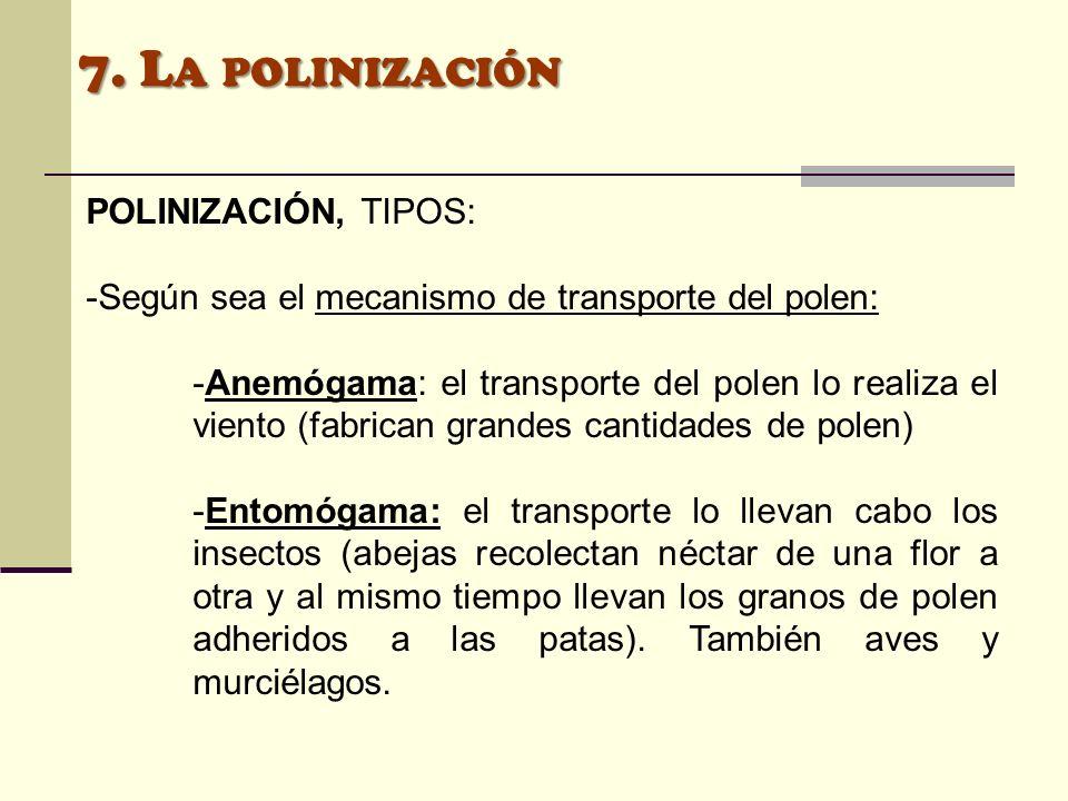 7. La polinización POLINIZACIÓN, TIPOS: