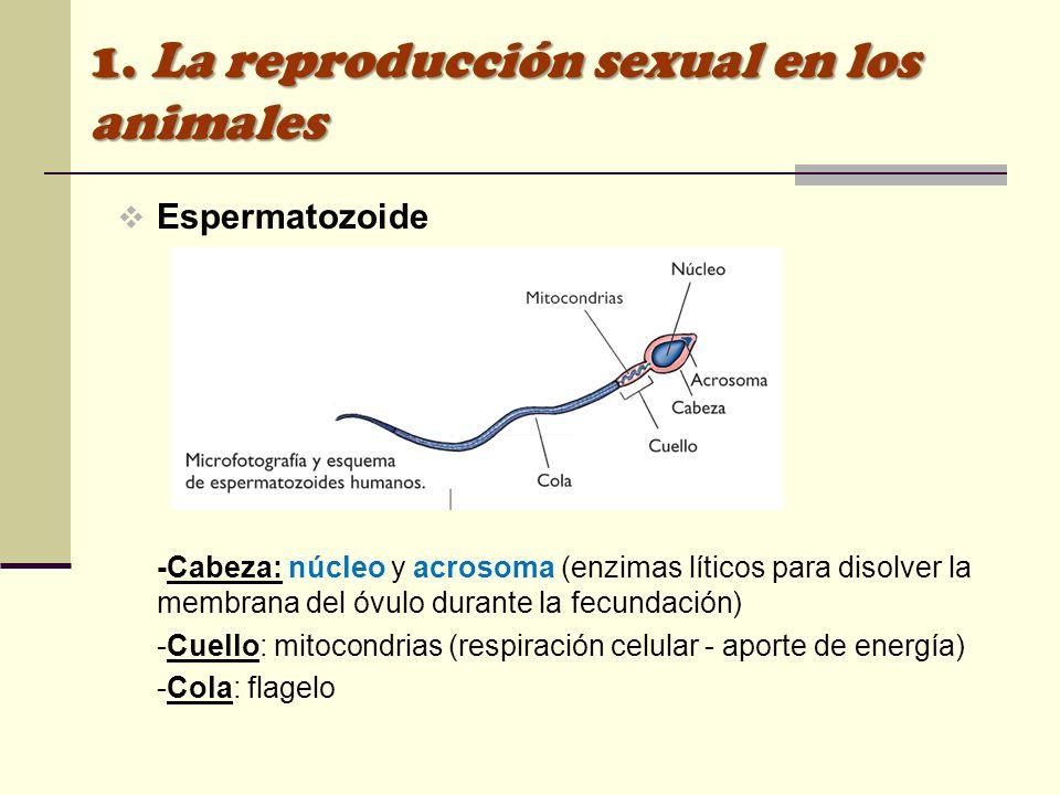 1. La reproducción sexual en los animales