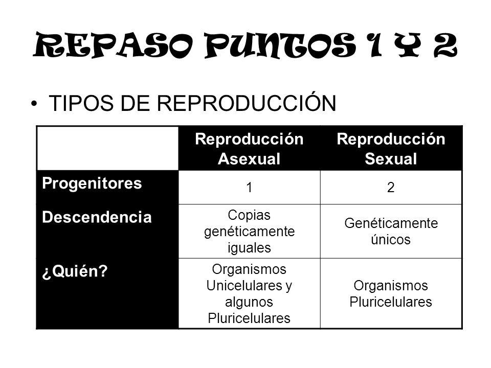 REPASO PUNTOS 1 Y 2 TIPOS DE REPRODUCCIÓN Reproducción Asexual