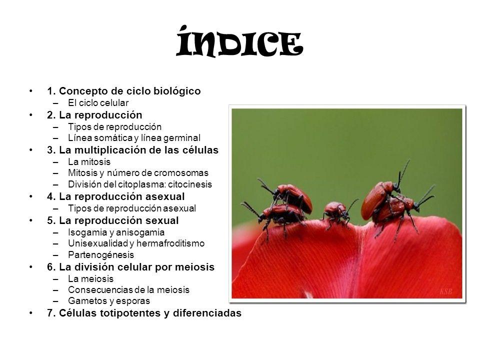 ÍNDICE 1. Concepto de ciclo biológico 2. La reproducción