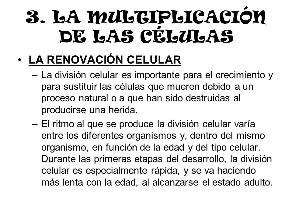 3. LA MULTIPLICACIÓN DE LAS CÉLULAS