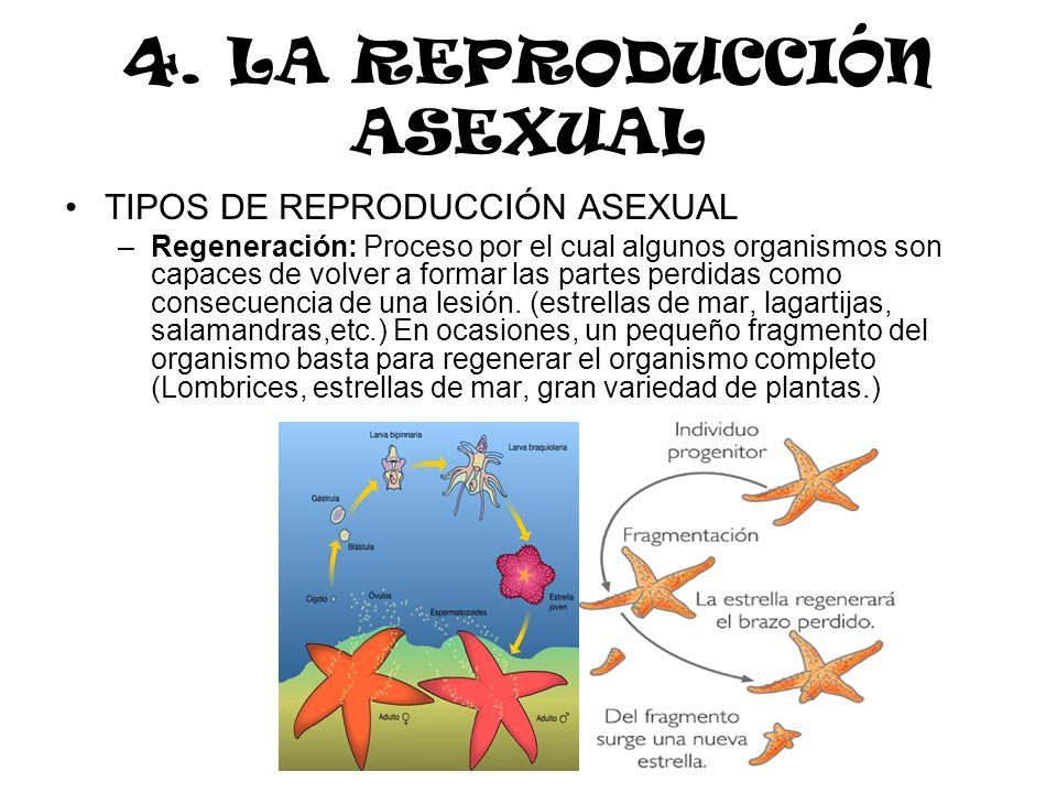 4. LA REPRODUCCIÓN ASEXUAL