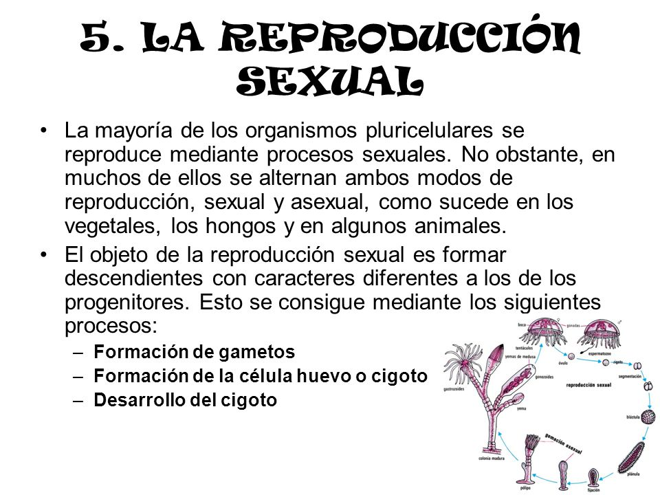 5. LA REPRODUCCIÓN SEXUAL