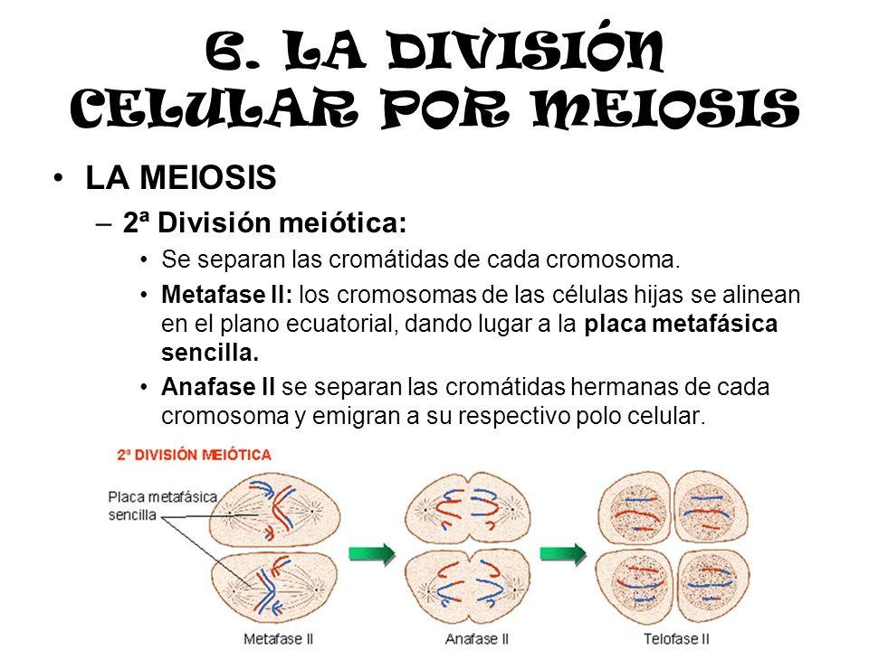 6. LA DIVISIÓN CELULAR POR MEIOSIS