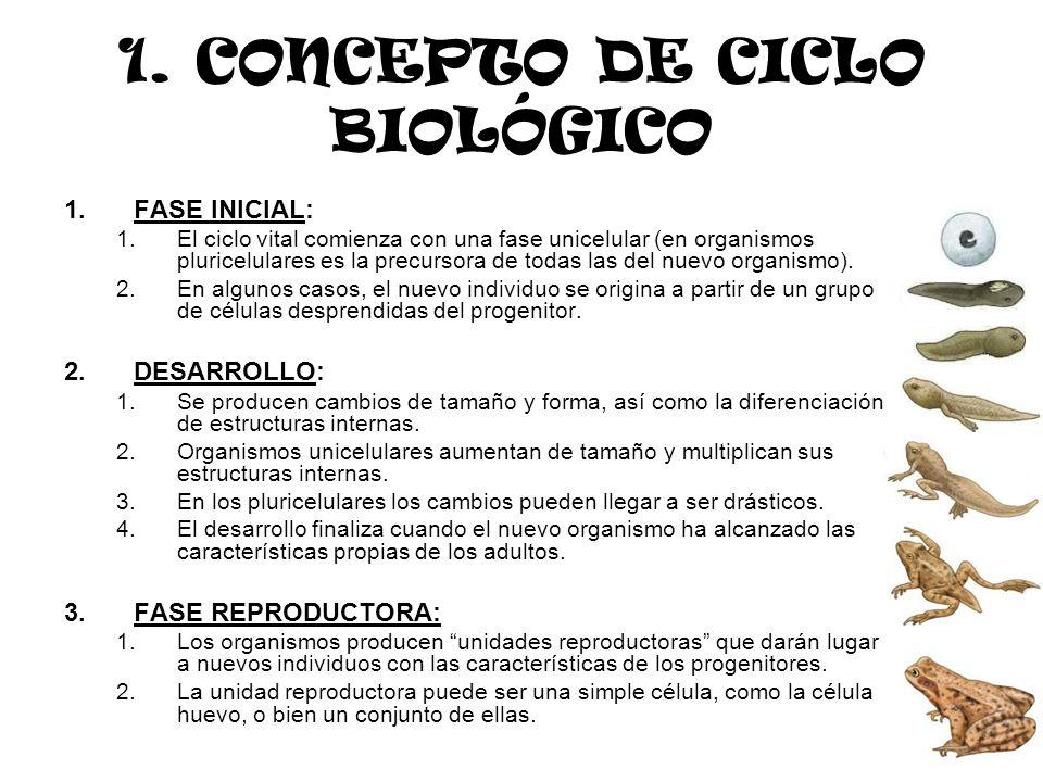 1. CONCEPTO DE CICLO BIOLÓGICO