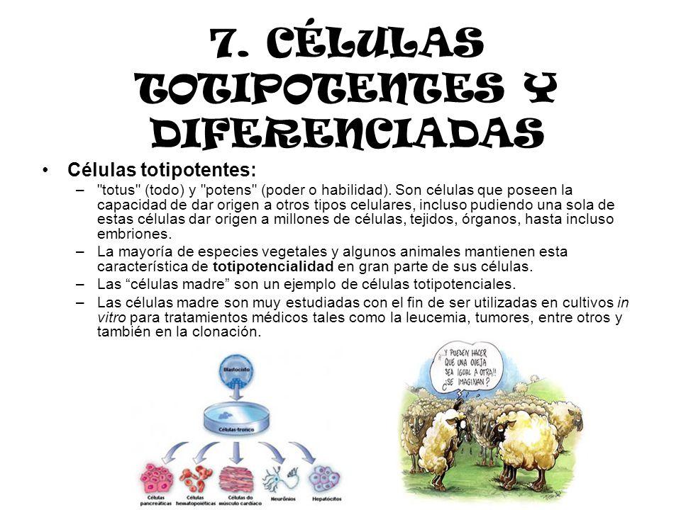 7. CÉLULAS TOTIPOTENTES Y DIFERENCIADAS