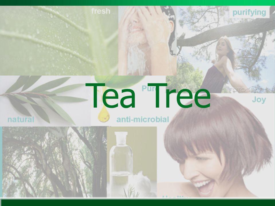 Tea Tree Lea una a una las frases de la presentación despacio y claramente. Refresca. Natural. Purifica.