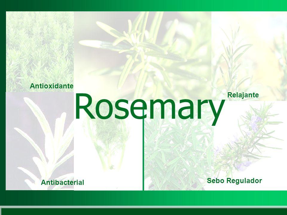 Rosemary Antioxidante Relajante Sebo Regulador Antibacterial