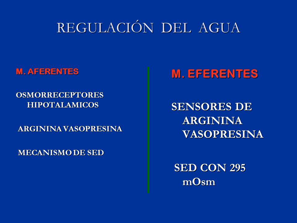 REGULACIÓN DEL AGUA M. EFERENTES SENSORES DE ARGININA VASOPRESINA