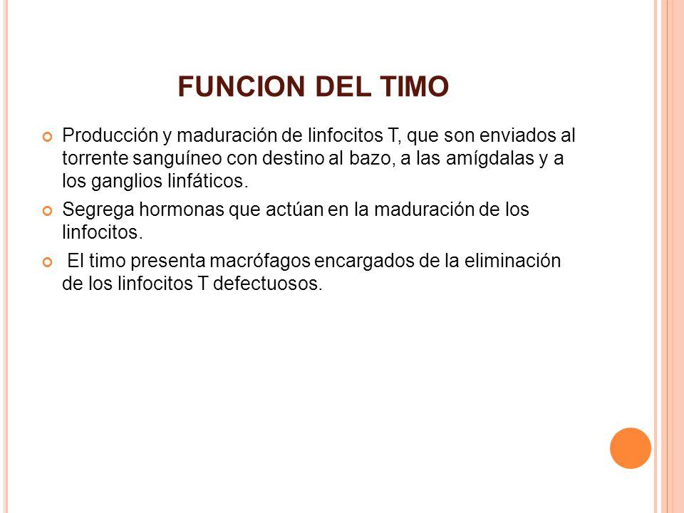 Moderno Funciones Del Timo Motivo - Imágenes de Anatomía Humana ...