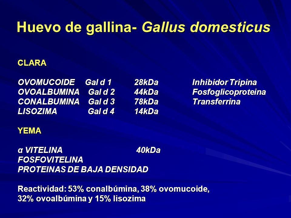 Huevo de gallina- Gallus domesticus