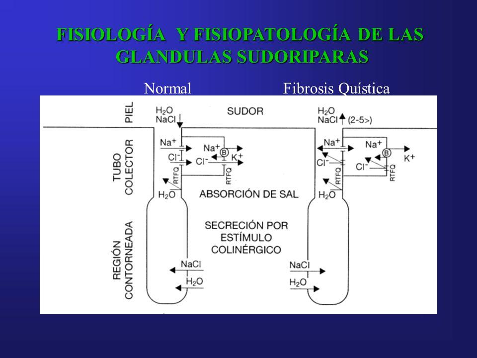 FISIOLOGÍA Y FISIOPATOLOGÍA DE LAS GLANDULAS SUDORIPARAS