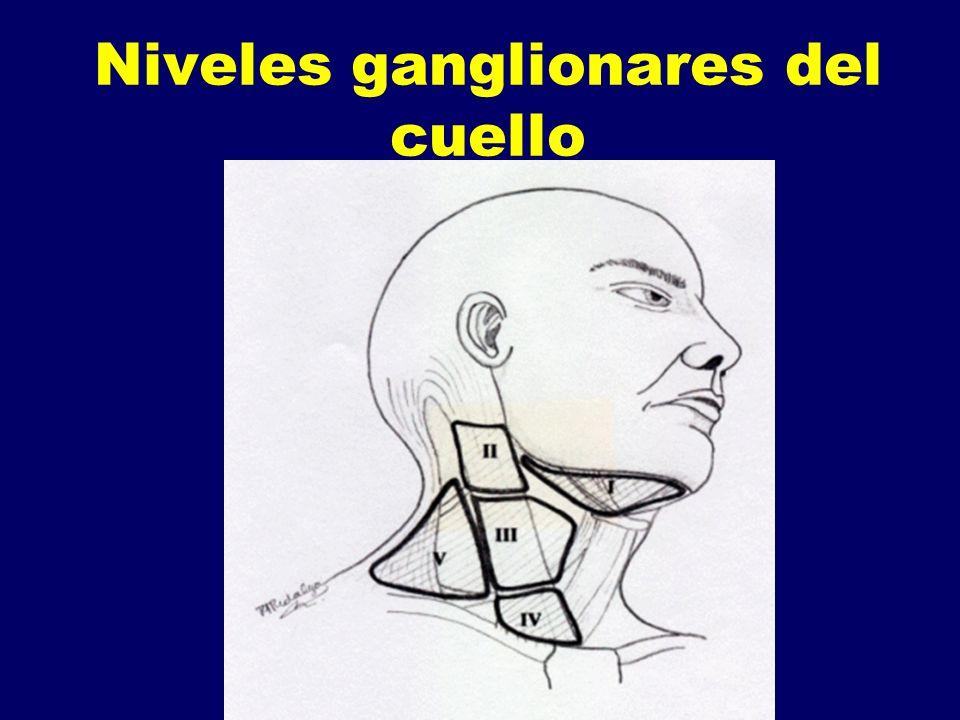 Niveles ganglionares del cuello