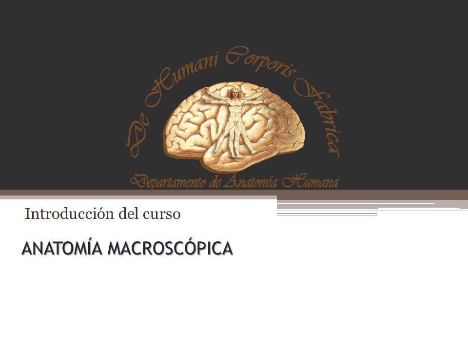 Lujoso Anatomía Macroscópica De Un Hueso Largo Componente - Imágenes ...