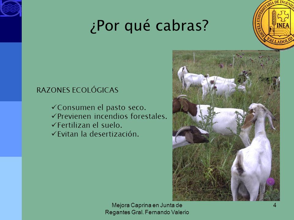 Mejora Caprina en Junta de Regantes Gral. Fernando Valerio